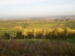 Ausflug in der Pfalz